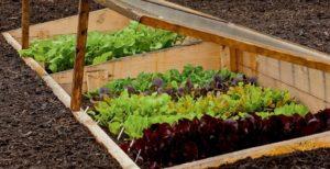 выращивание на теплой грядке