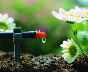 капельный полив цветов