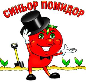 синьор помидор
