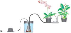 полив домашних растений