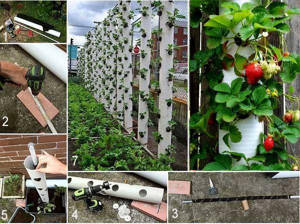 Вертикальная клубника выращивание 74