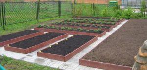 Как правильно делать грядки на огороде для моркови и лука 68