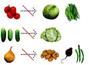 не совместимые овощи