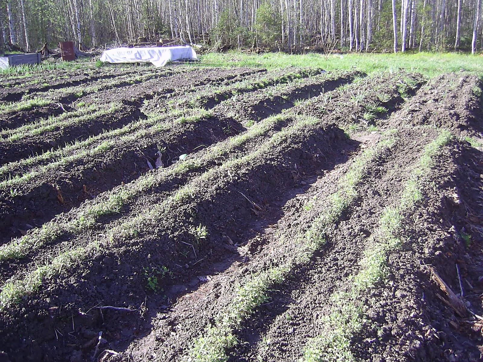 Сидераты как удобрения - когда сеять, какие лучше выбрать 38