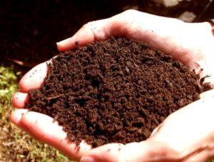 субстрат для посадки семян