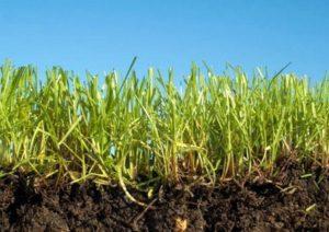 плодородный слой земли