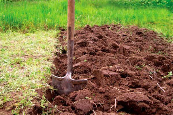 можно ли березовую листву перекапывать весной с землёй новостроек