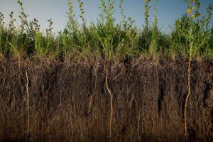 принцип воздействия сидератов на почву