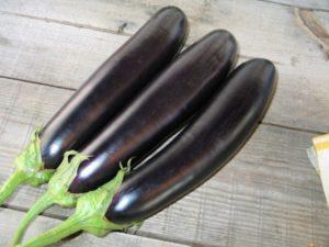 баклажан саламандра