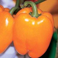 перец оранжевое чудо описание