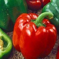 правила выращивания перца клаудио