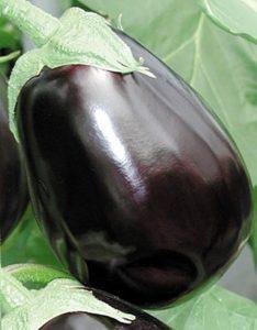 выращивание сорта клоринда