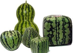 формы арбузов