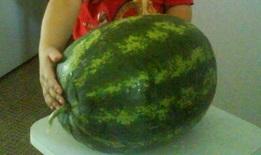 спелый арбуз исключительного сорта