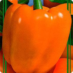 перец оранжевая красавица