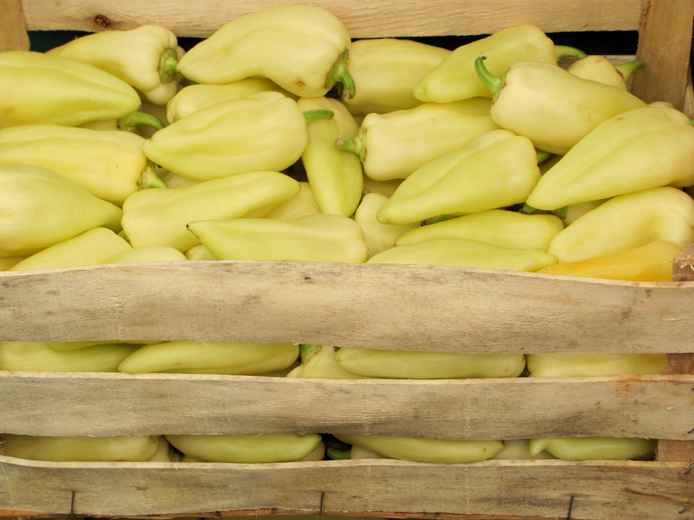 огурцы на зиму рецепты с фото пошагово