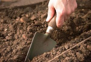 почва для кабачков