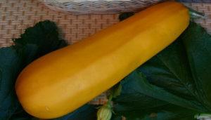 кабачки цвета солнца