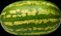 арбуз каролина гросс