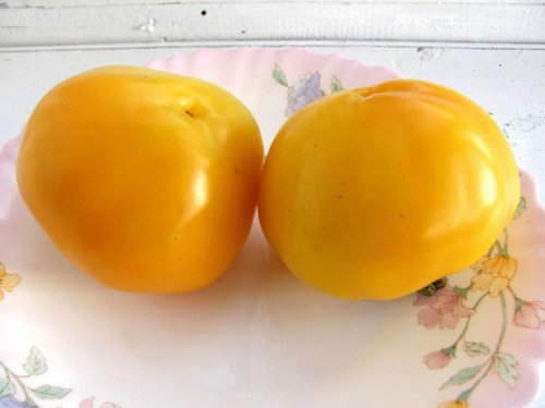 перец Солнышко