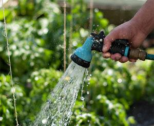 полив арбузов