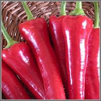 красные сладкие перцы Какаду