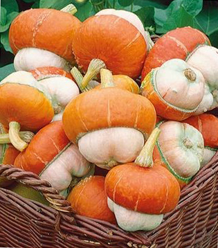 декоративная тыква оранжевая