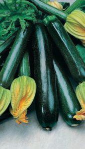 кабачок-цукини черный красавец характеристика