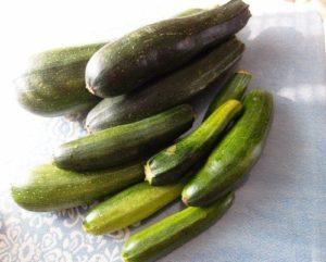 кабачок-цукини черный красавец применение