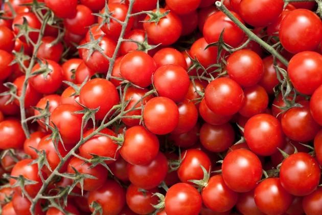 урожай маленьких красных томатов