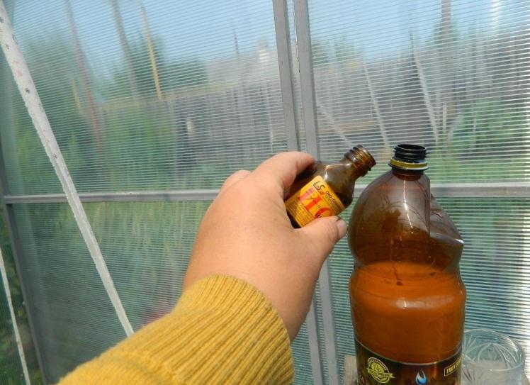 подкормка томатов в теплице йодом
