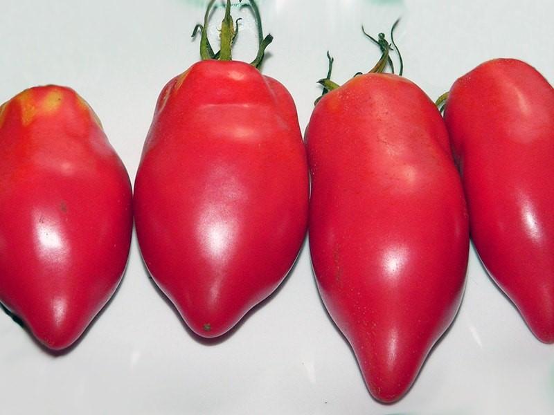 томат Капия розовая