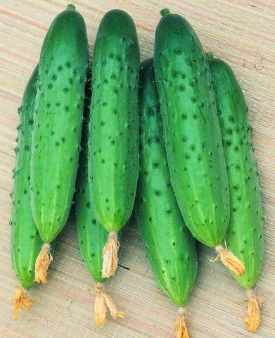 красивые зеленые огурцы