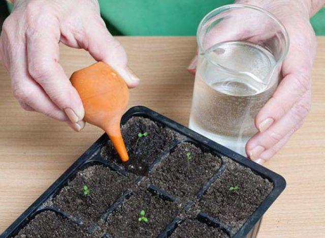 Как в домашних условиях выращивать петунию