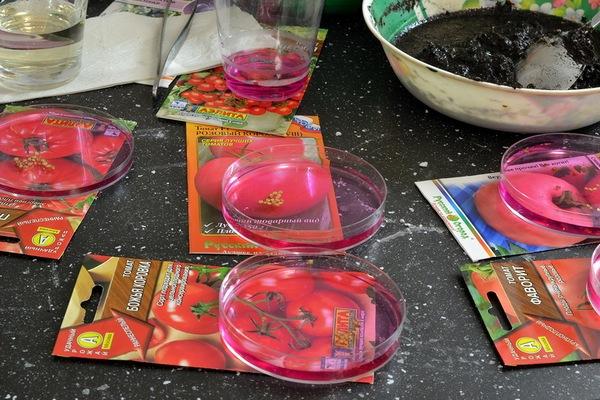 раствор марганцовки для семян томатов
