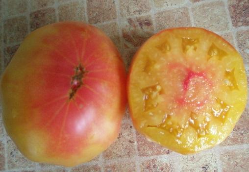 томат Загадка природы