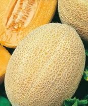 Дыня Ананасная: описание сорта и сравнение ананасных видов культуры