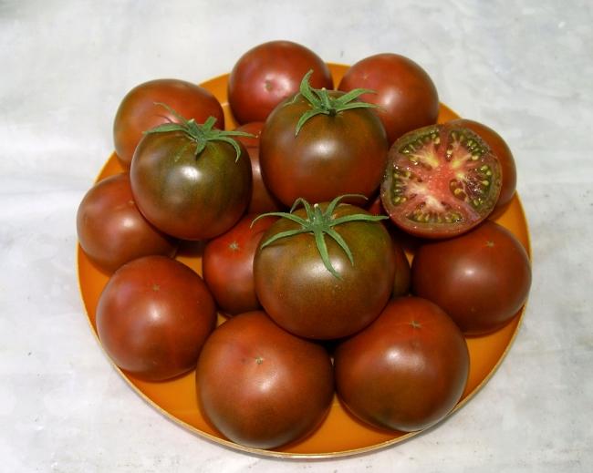 томат шоколадка фото отзывы