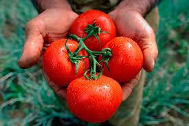 четыре томата