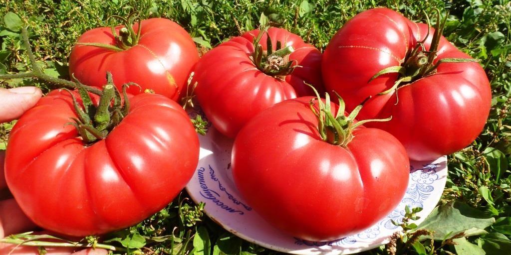 томаты Бычье сердце на тарелке