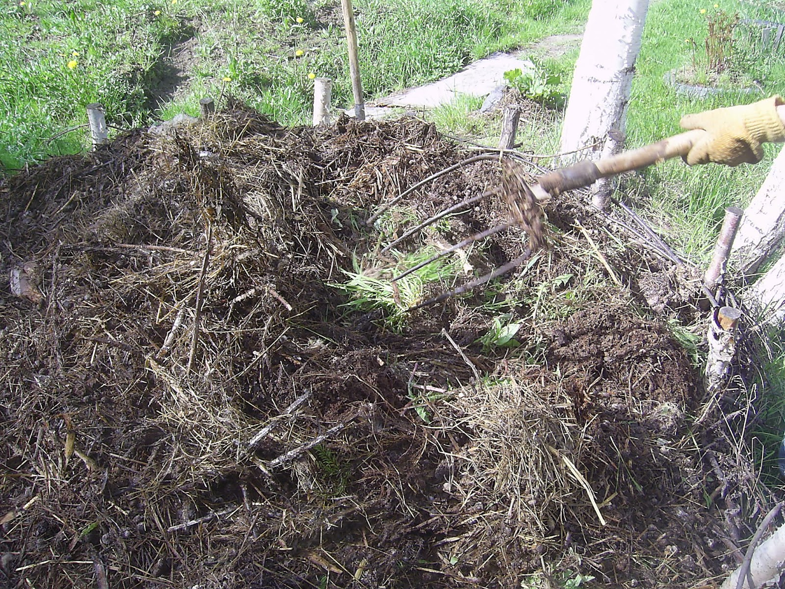 навоз и сорняки для выращивания дыни