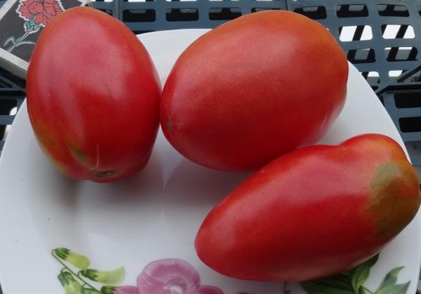 томат Перцевидный крепыш