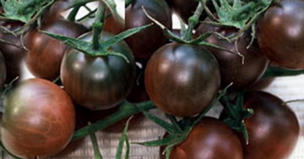 томат Черная вишенка