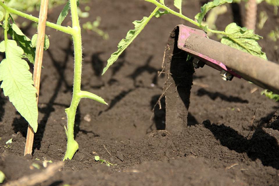 рыхление почвы томатов