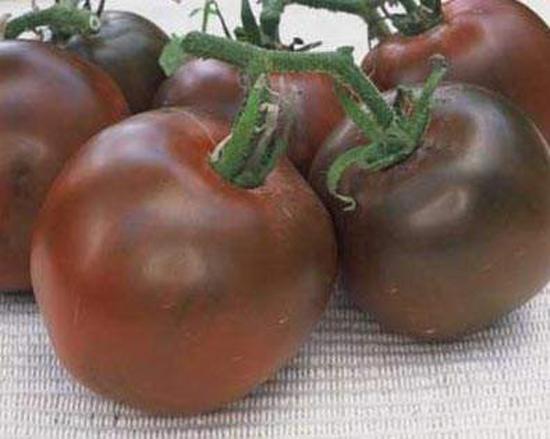 сорт томатов Черный принц