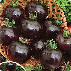 томат Черная гроздь