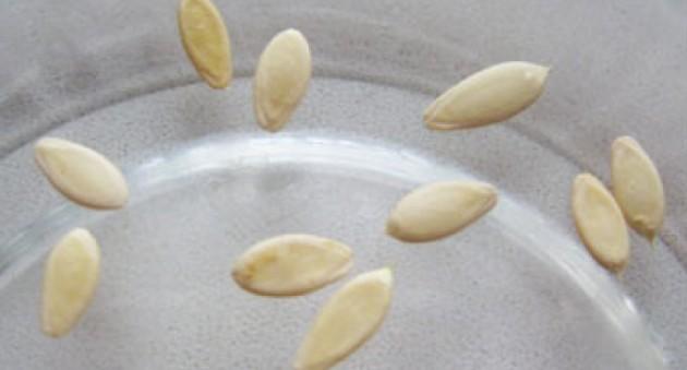 семена огурцов для посадки