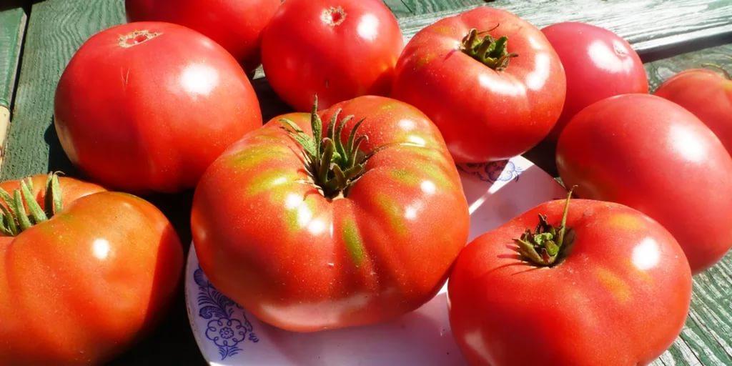 помидор Юсуповские