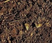 листовая земля
