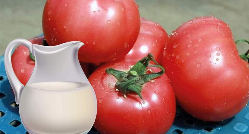 молоко и томаты